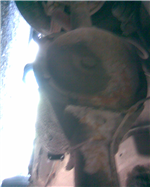 Diferencial Falcon