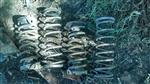 Espirales Torino